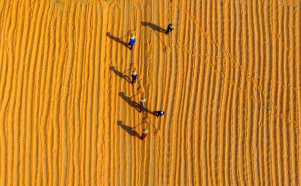 10月11日,在山東省臨沂市平邑縣一家種業基地,農民晾曬收穫的玉米(無人機拍攝)。 新華社 圖