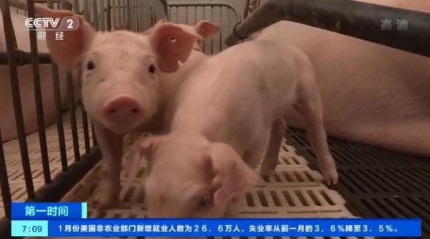 我国启动生猪生产恢复发展三年行动