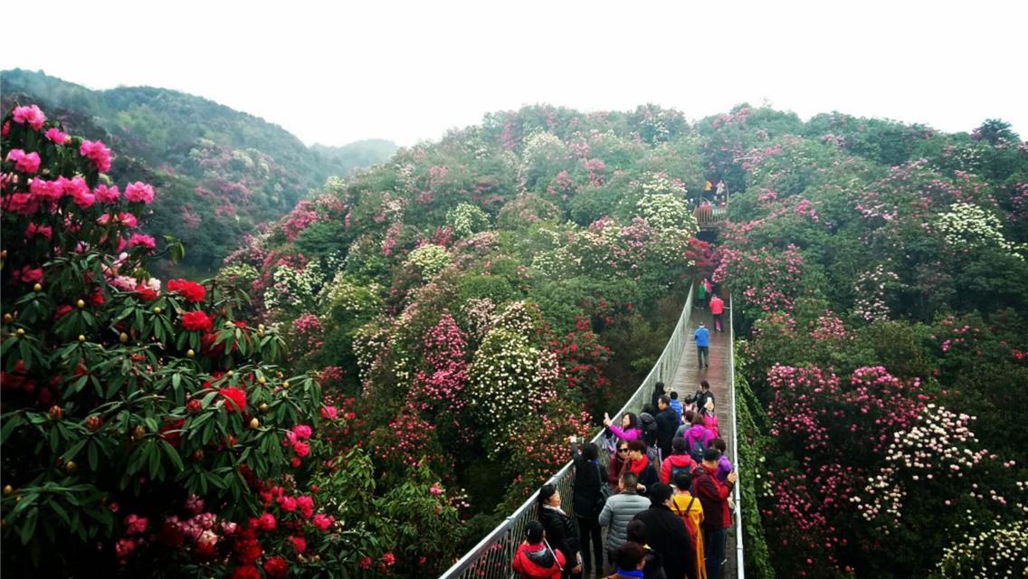 贵州百里攻略密室逃脱祭花神v攻略景区真人图解1杜鹃举办图片