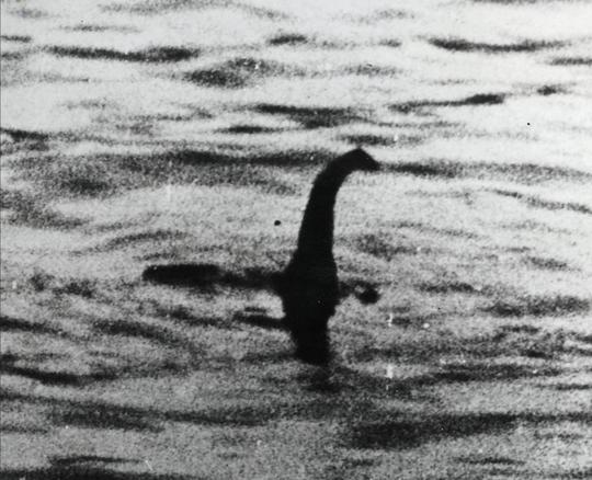 美国海滩惊现神秘生物尸体 形似尼斯湖水怪(图)