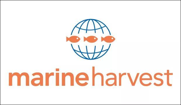 挪威最大的三文鱼生产商――Marine Harvest
