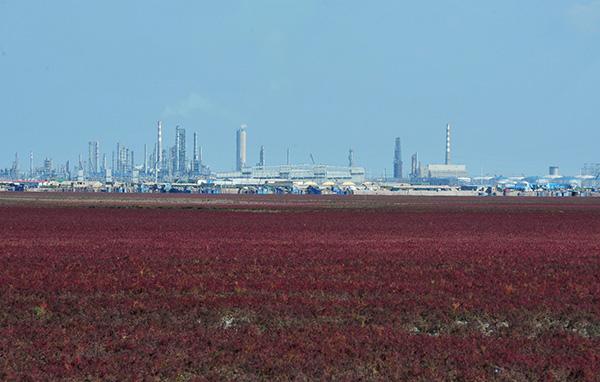 辽宁省盘锦市红海滩。东方IC 资料