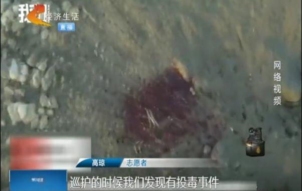 """www.99msc.com 仨男子合伙偷""""年鸡"""",作案3起盗29只鸡被刑拘"""