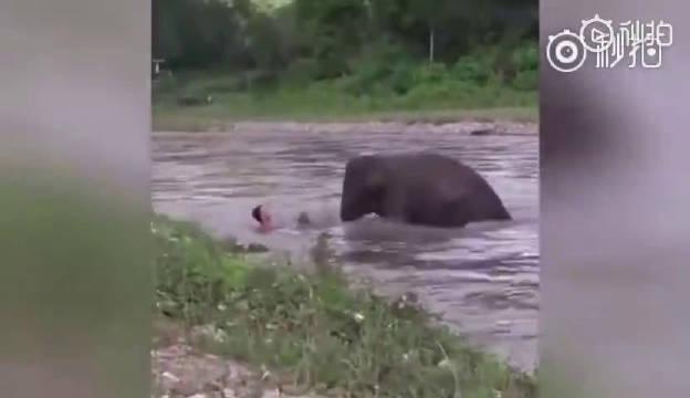 泰国一男子在河里游泳,大象以为他溺水,连忙赶去救他上岸!