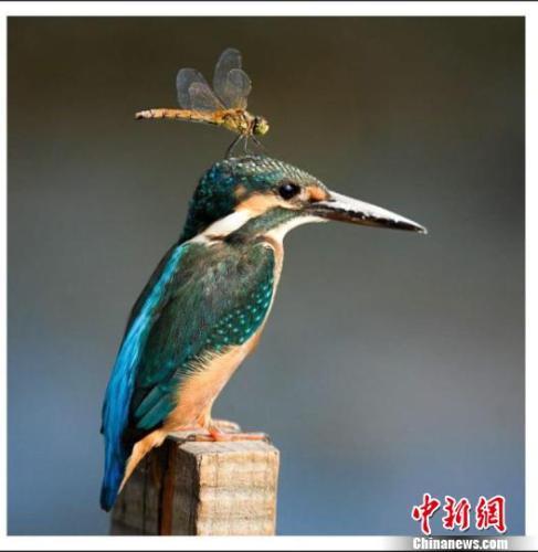http://www.hljold.org.cn/heilongjianglvyou/5072.html