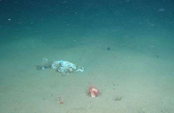 最深垃圾堆:太平洋1.1万米深处海沟中发现大量白色垃圾