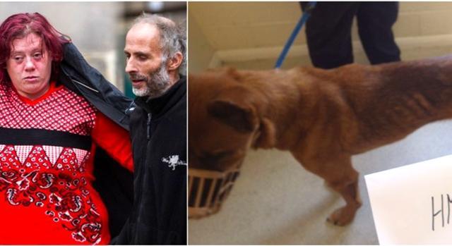 四只宠物狗瘦骨嶙峋 英国一对夫妇被禁止养狗三年
