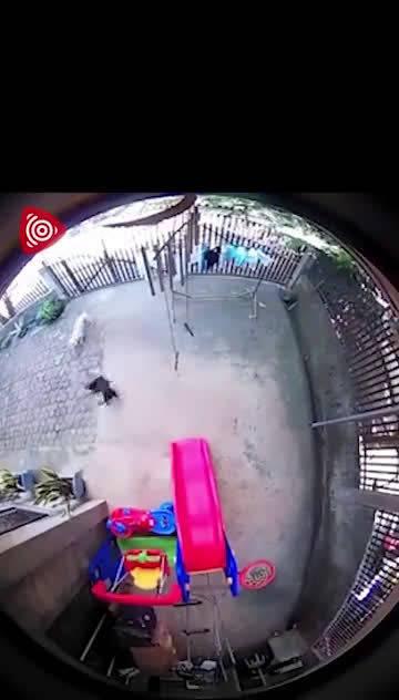 7月19日,菲律宾基达帕万市,一条眼镜蛇闯入一间民宅