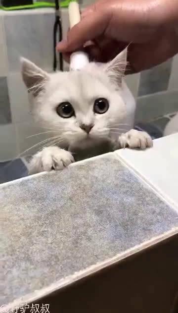 洗澡洗的正开心……万万没想到呀!