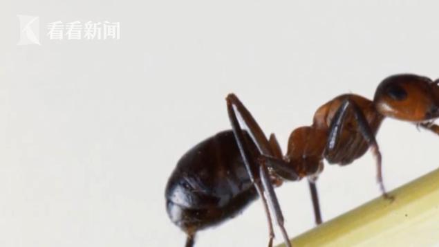 仅仅被蚂蚁咬了一口 女子突然休御匾会国际线上娱乐克险丧命