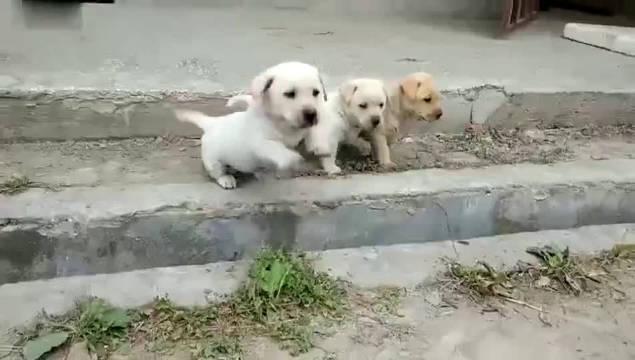 古有精卫填海,现有狗子填沟