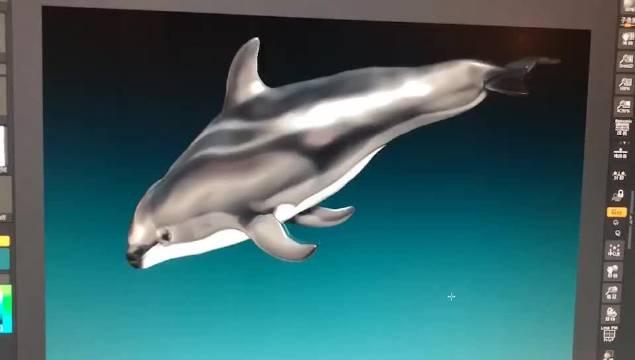 太平洋短吻海豚