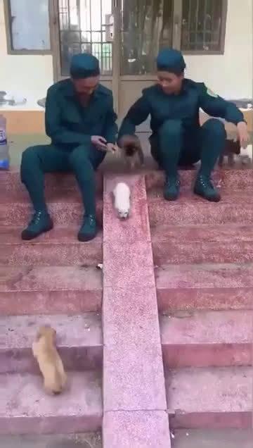 小狗狗排队滑滑梯,每一只都好可爱。