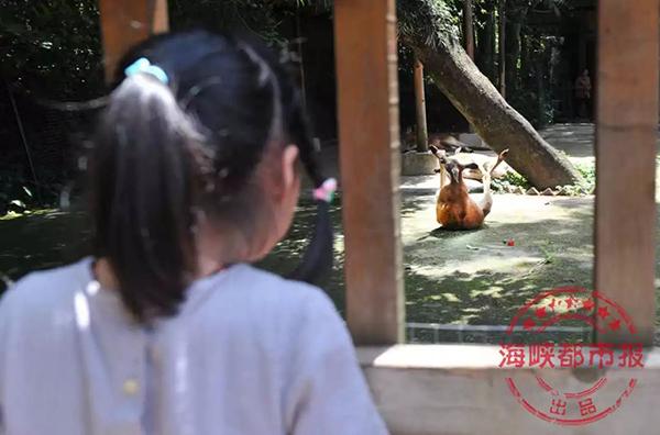小朋友们观察袋鼠