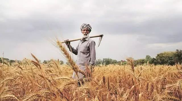 ▲印度农民