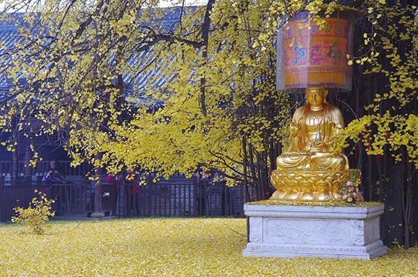 龙发8娱乐亚洲唯一官网,甘肃庆阳农村过年耍社火有一种习俗叫过关 你知道是什么吗