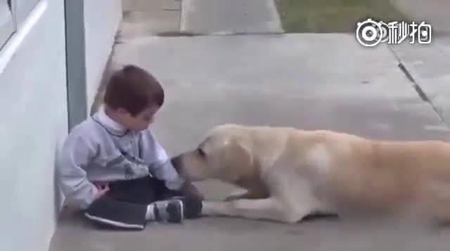 一只拉布拉多安慰唐氏综合征患儿,狗狗被孩子反复拒绝多次了