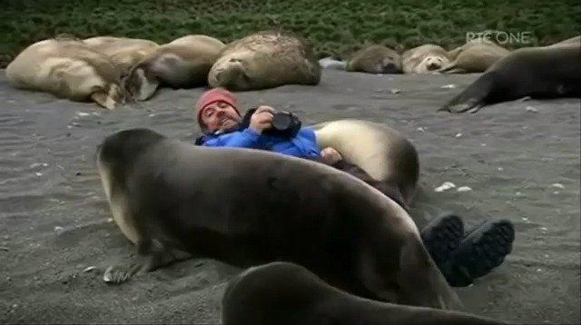 国外摄影师在海边拍照片时遇到蠢萌蠢萌的大海豹,不仅配合拍摄