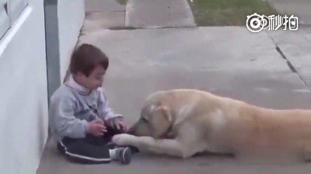 一只拉布拉多安慰唐氏综合征患儿,狗狗被孩子反复拒绝多次了,不