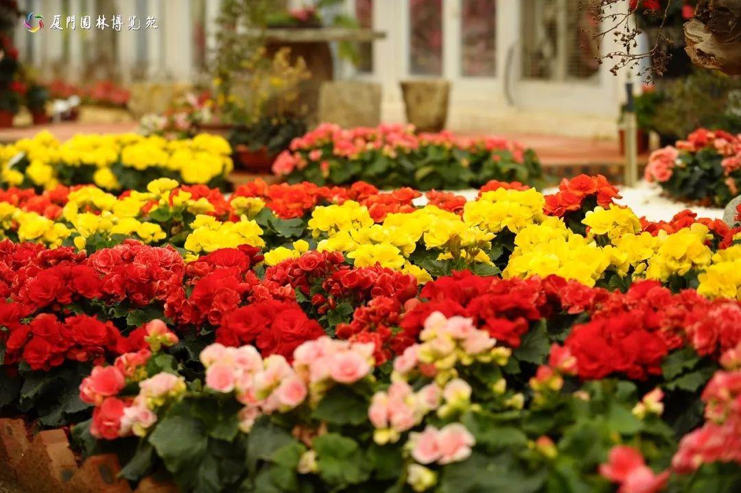 春暖花开!厦门最新踏青,赏花,游园攻略来了,周末约起