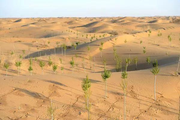 ▲库布齐沙漠