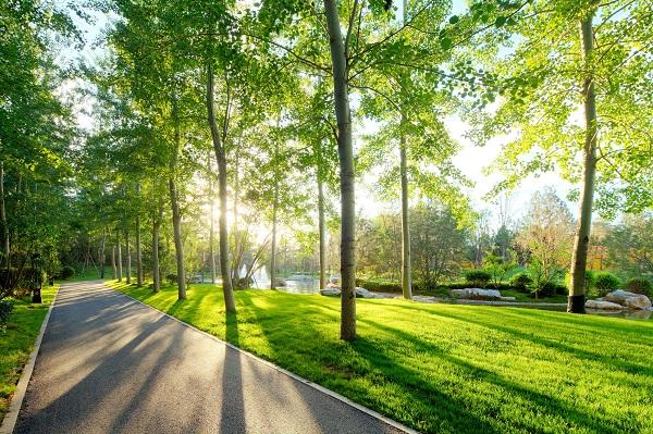 上海拟新增10条绿化特色道路
