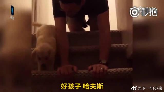 超暖的主人!胆小狗狗不敢下楼梯,主人亲自示范
