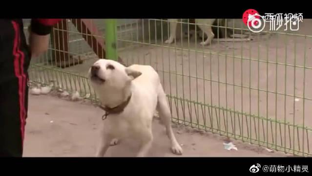 韩国版忠犬八公!与主人走失狗狗一直等待,当再次见主人,泪