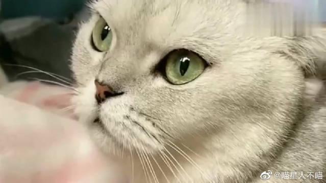 萌宠:猫咪团子真是太彪悍了