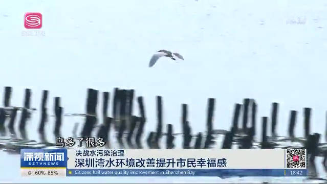 深圳湾水环境改善
