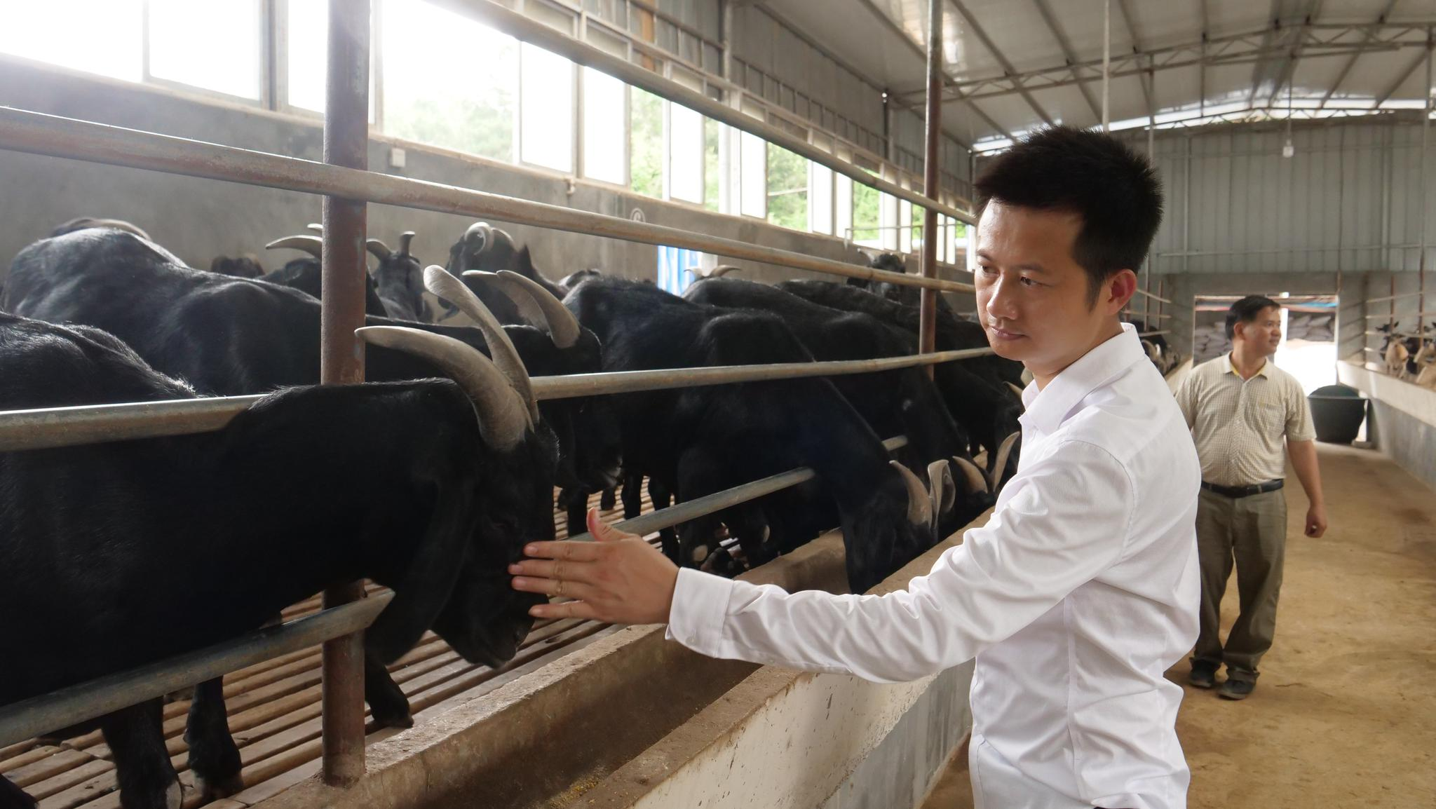 """刘入源:从羊倌到带领乡亲发""""羊"""