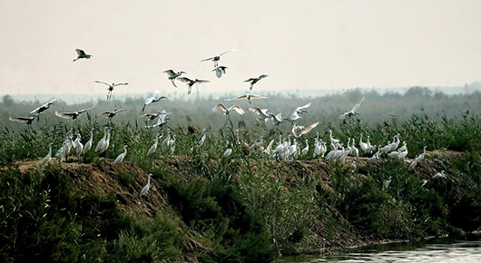 """院士专家调研""""华北绿明珠""""  助力衡水湖申报国际重要湿地"""