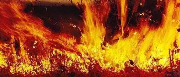 山西森林火灾原因查明,6名消防员牺牲,嫌犯被刑拘图片