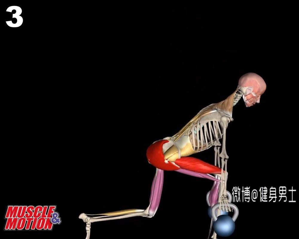 几个臀部训练的生理解剖原理!
