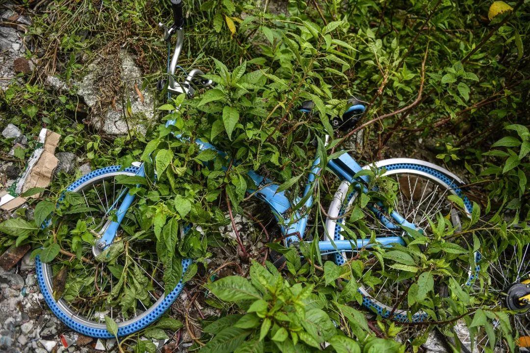 △一辆被丢弃的小鸣单车