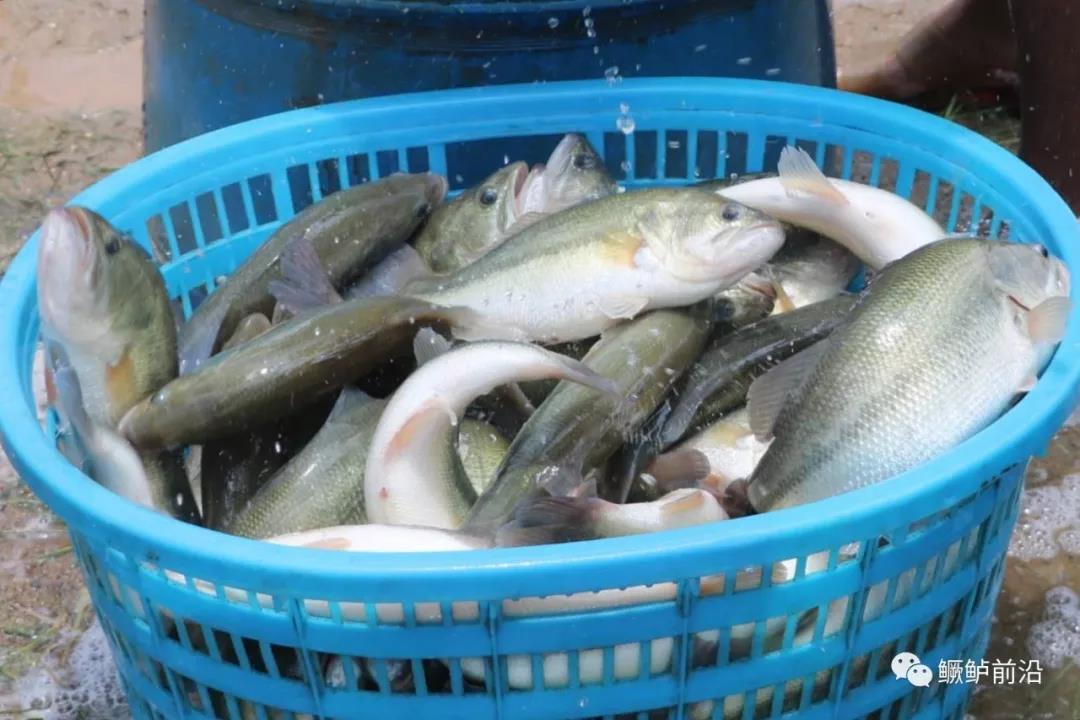 如何预防拉网应激死鱼