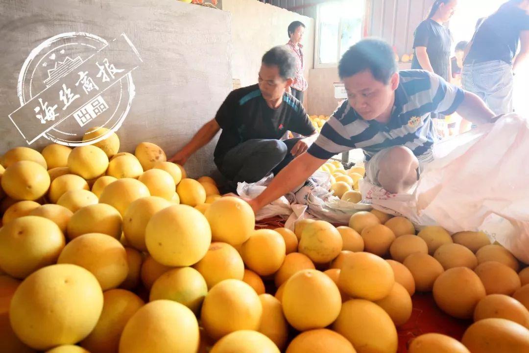 10斤仅售22元 南安残疾果农130吨红心柚滞销