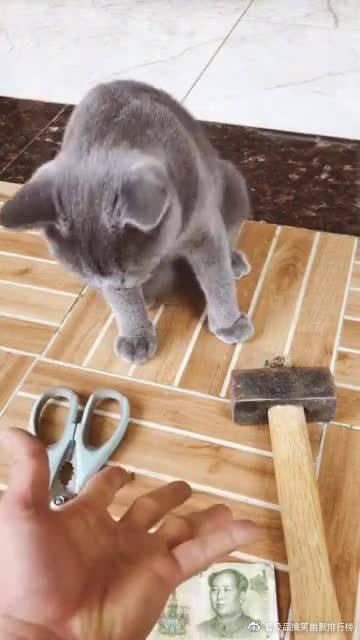 这是我见过最聪明的猫咪,好可爱啊。。。