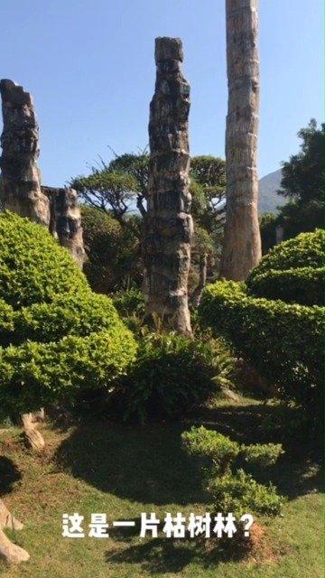 来深圳仙湖植物园,看木化石林