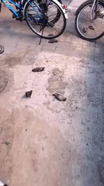 网友爆料,在昌平区北环里18号楼与19号楼中间