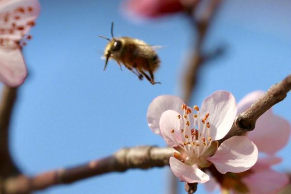 随着天气转暖,玉渊潭花朵开始绽放。程宝纪 摄(来源:微博@气象北京)