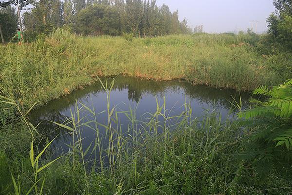 发现李文星尸体的水塘。视觉中国 资料图