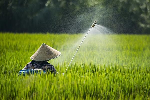 报告:全球变暖或增加虫害 严重影响中国水稻产区