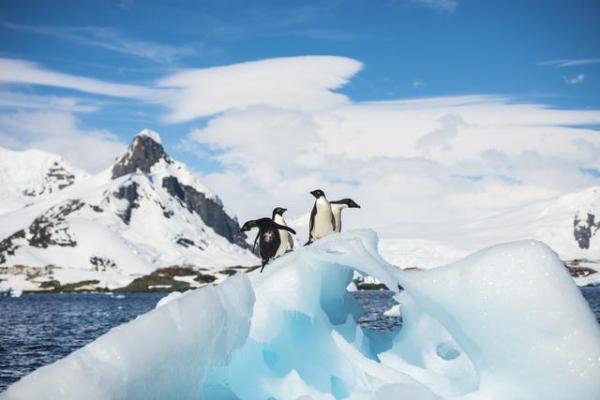 """中国掀起""""南极热"""":有人一年去5次,有人一次花费100万"""