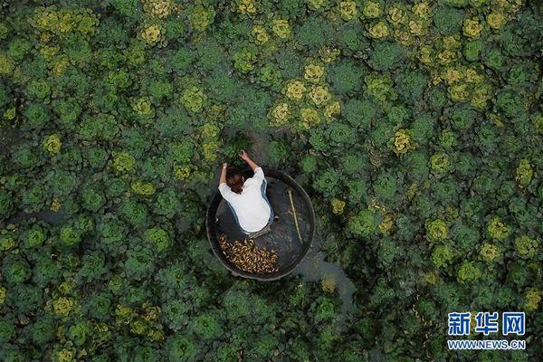 浙江湖州:秋风起 采菱忙