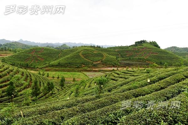 考核通过!贵州6地拟获国家农产品质量安全县称号