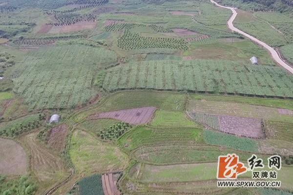 双牌:千亩果蔬基地带富一方村民