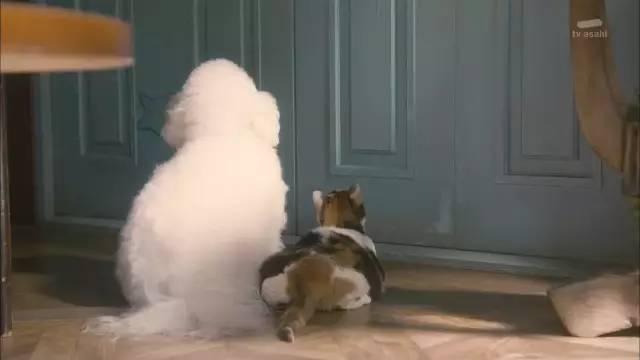 另表,剧中写出了很众现实中会遇到的宠物与主人的题目。