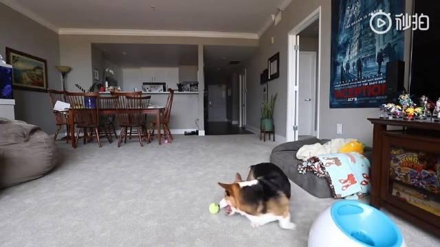国外的一位网友在出门前留下相机,偷拍了狗狗的一天