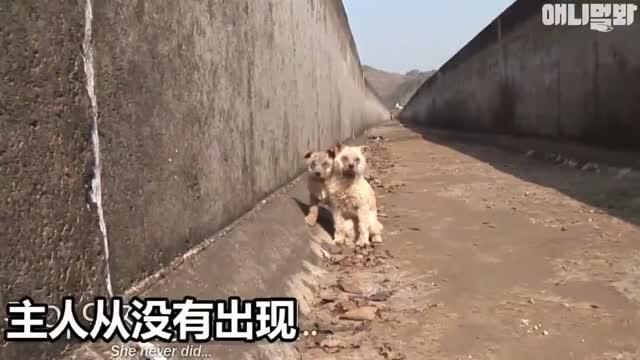 两只因为患了皮肤病就被人扔在废弃河道里等死的小奶狗